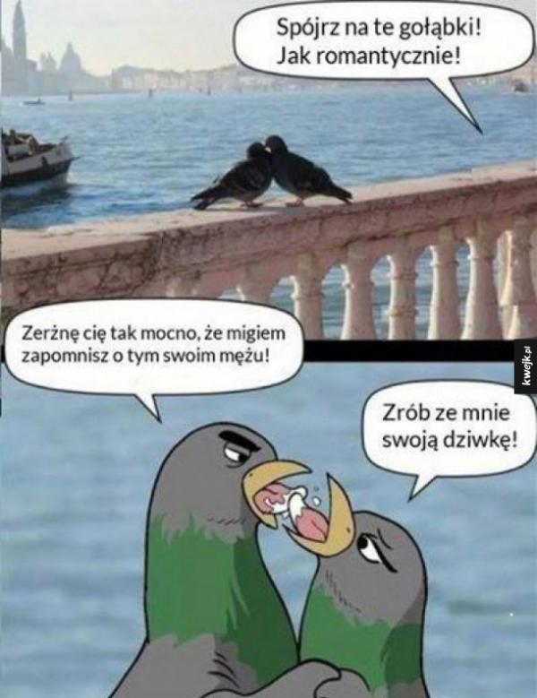 Romantyczne gołąbki