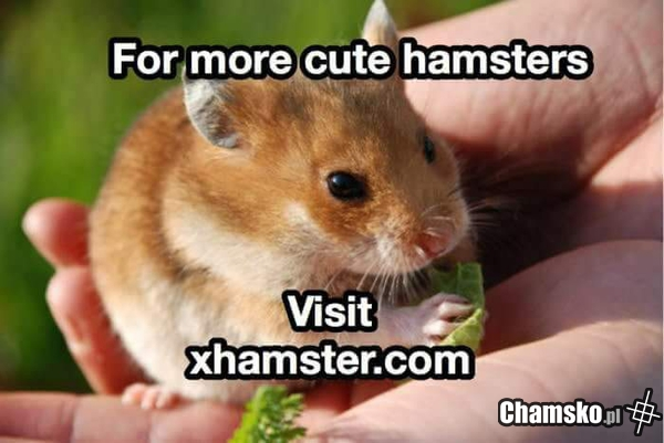 For more cute haamsters